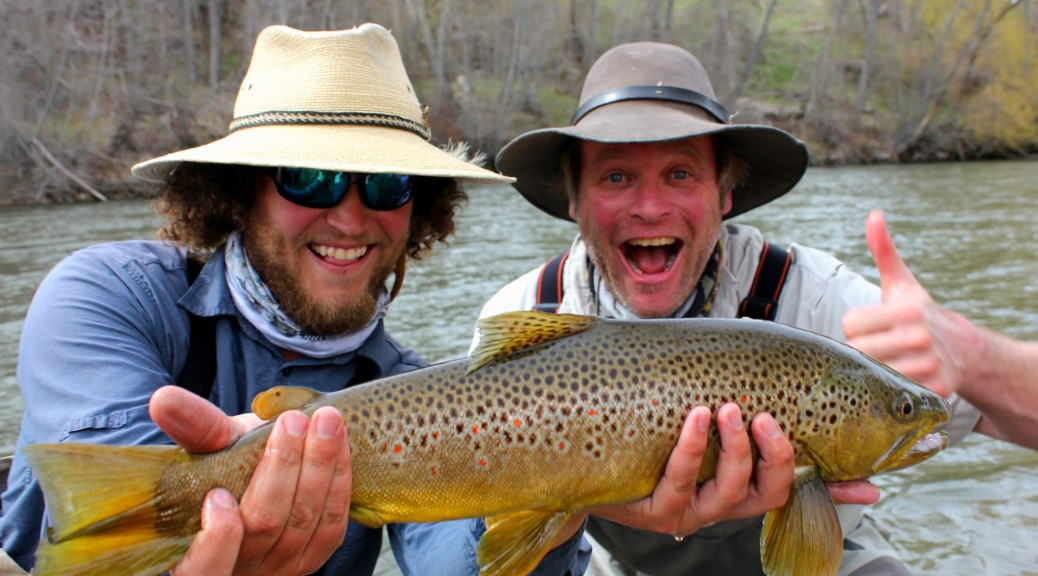 trophy bitterroot river brown trout fly fishing guides hamilton montana